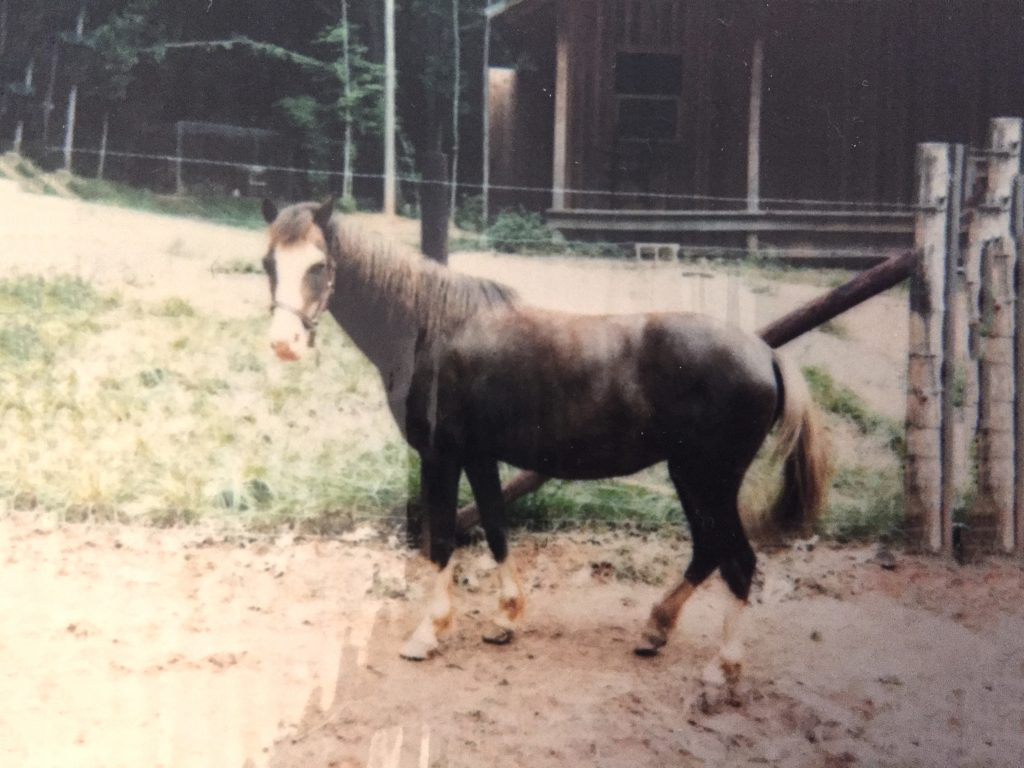 My pony Sunbeam