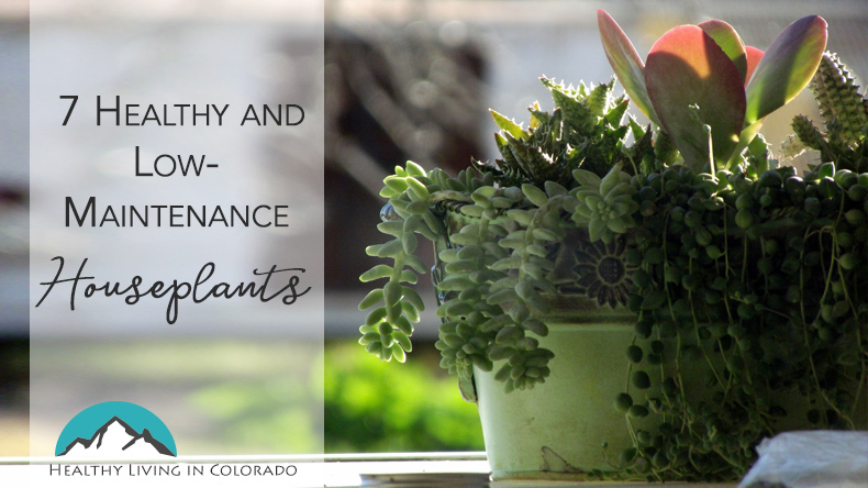 Easy Houseplant Blog Title Image Healthy Living in Colorado