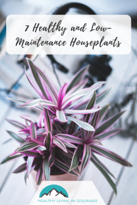 Healthy Houseplants - Healthy Living in Colorado