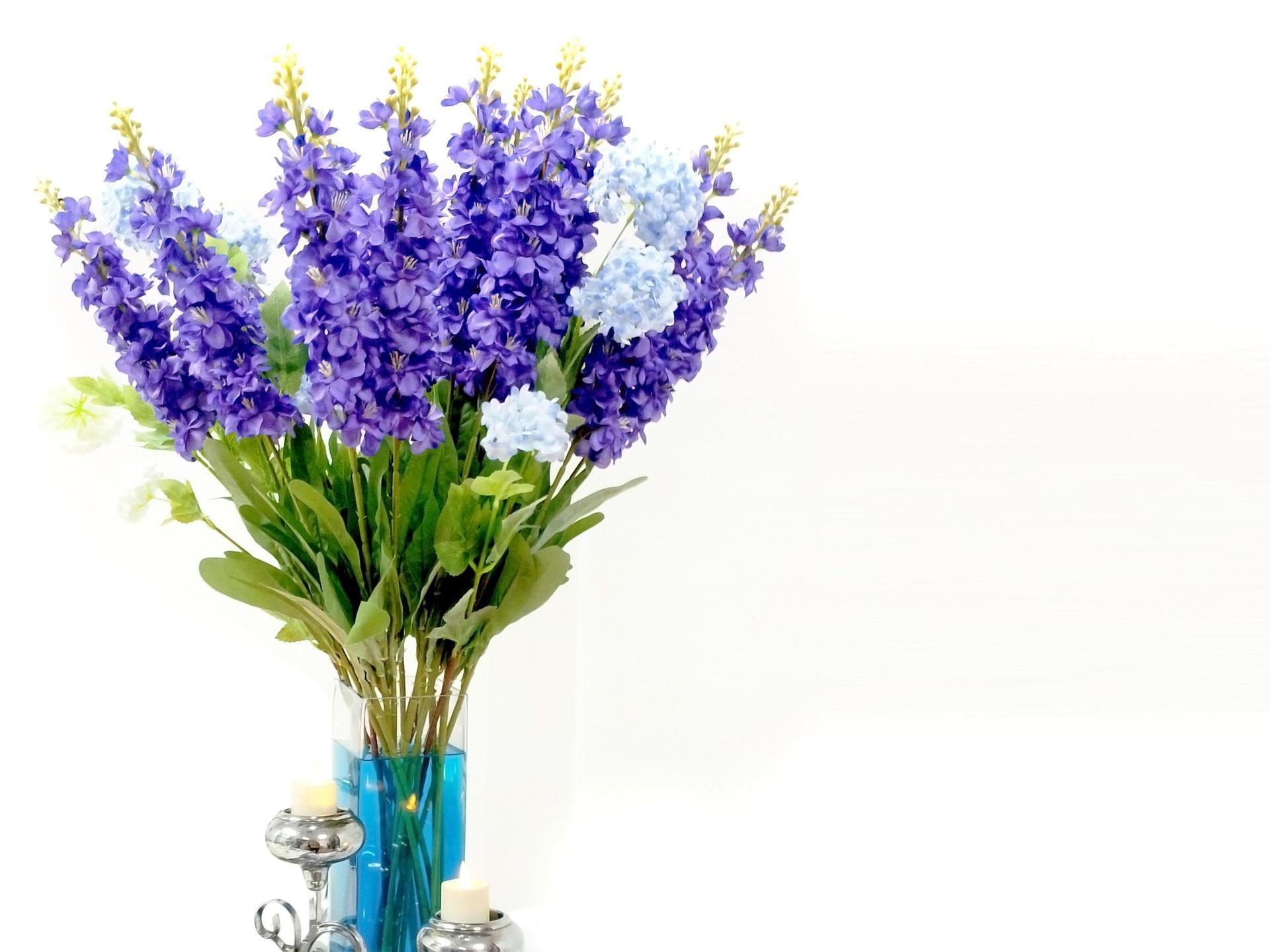 Lavender Healthy Living in Colorado Easy Houseplant