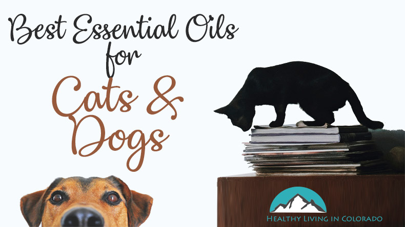 Best Essential Oils for Cats and Dogs-bg