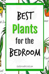 Best Bedroom Plants Drawings of Houseplants