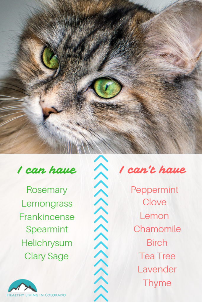 Essential oils for Cats - Healthy Living in Colorado