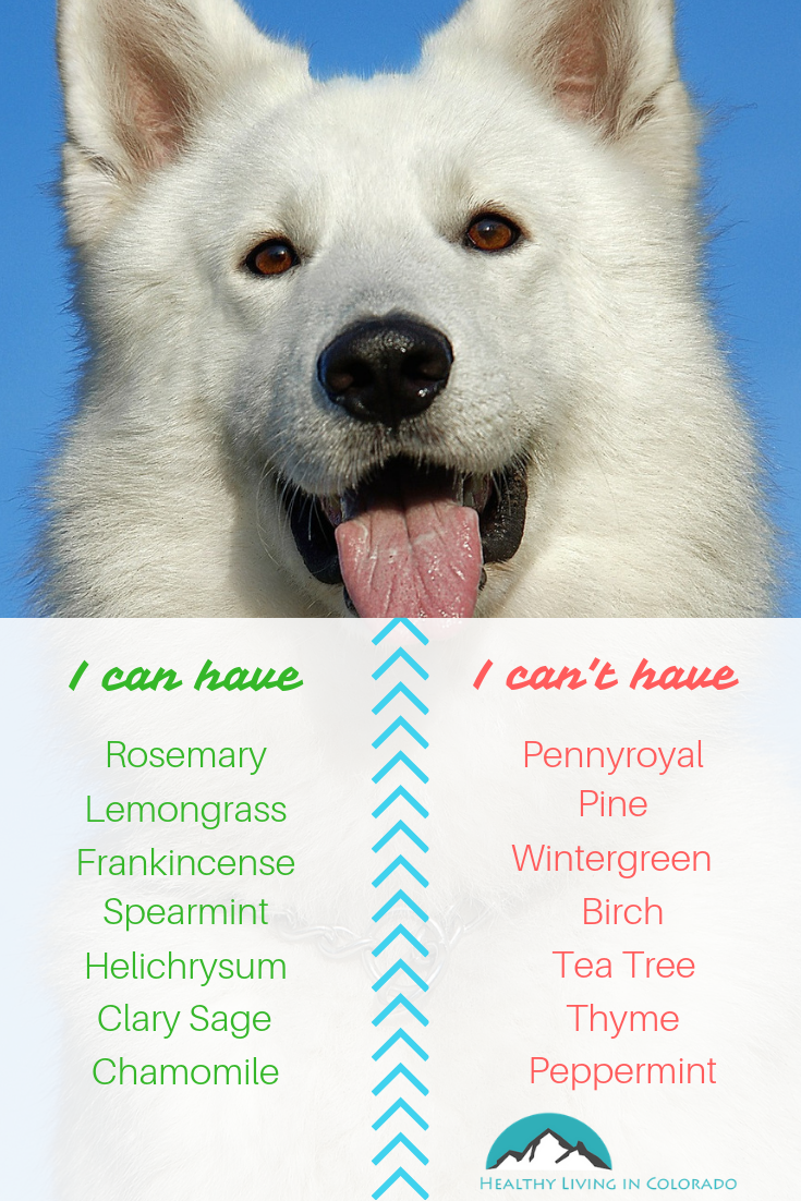 Essential Oils for Dogs - Healthy living in Colorado