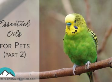 Essential Oils for Pets Part 2 Title Image - Healthy Living in Colorado