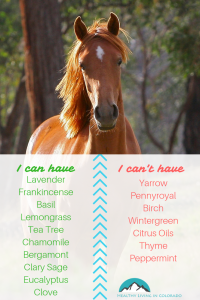 Horses Essential Oils for Pets - Healthy Living in Colorado