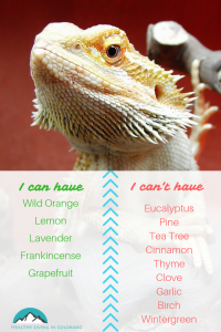 Reptiles Essential Oils for Pets - Healthy Living in Colorado