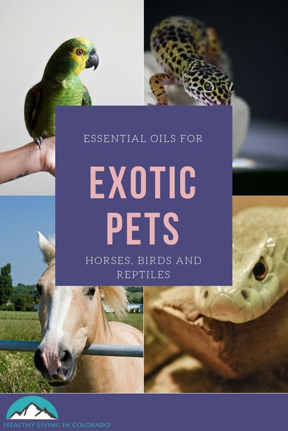 essential oils for exotic pets