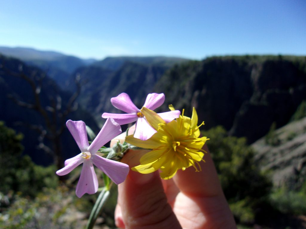 Flowers and the Black Canyon of the Gunnison National Park